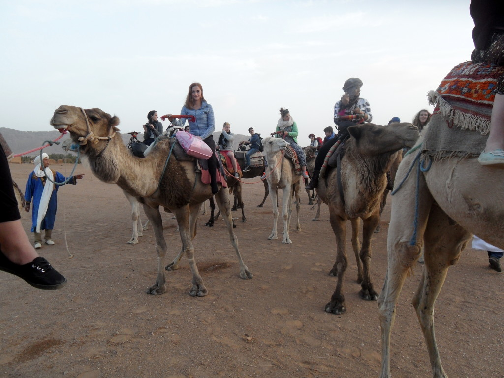 camel traffic jam
