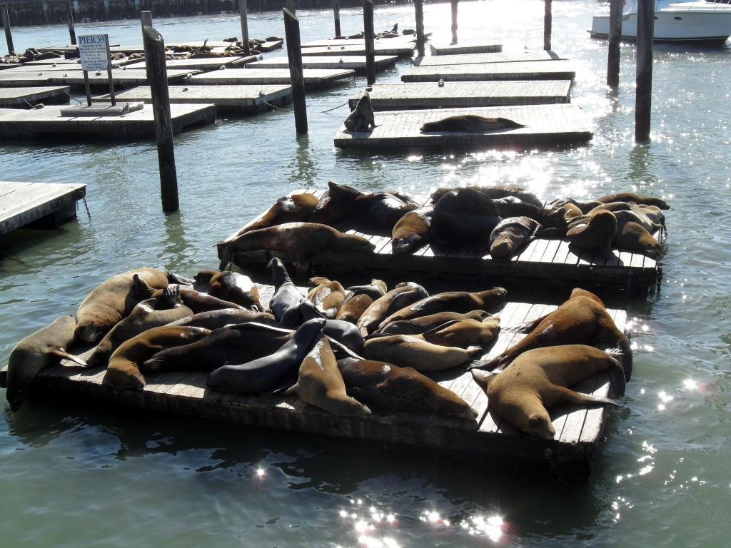 sea lions embarcadero