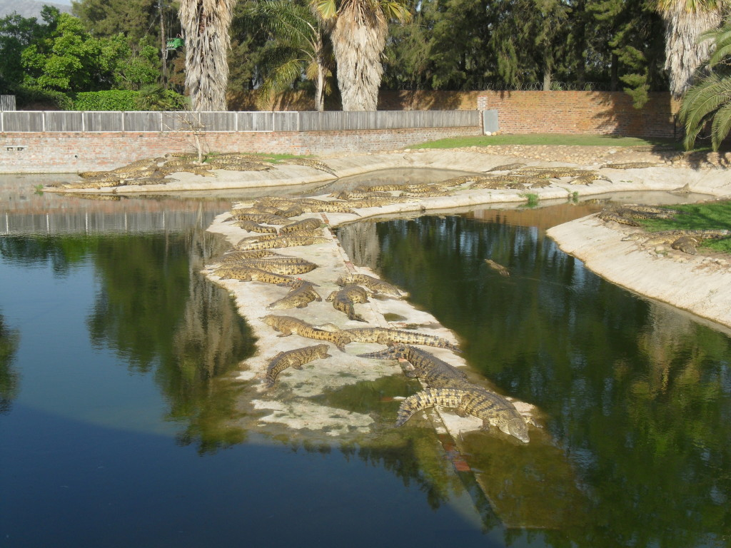 croc-farm