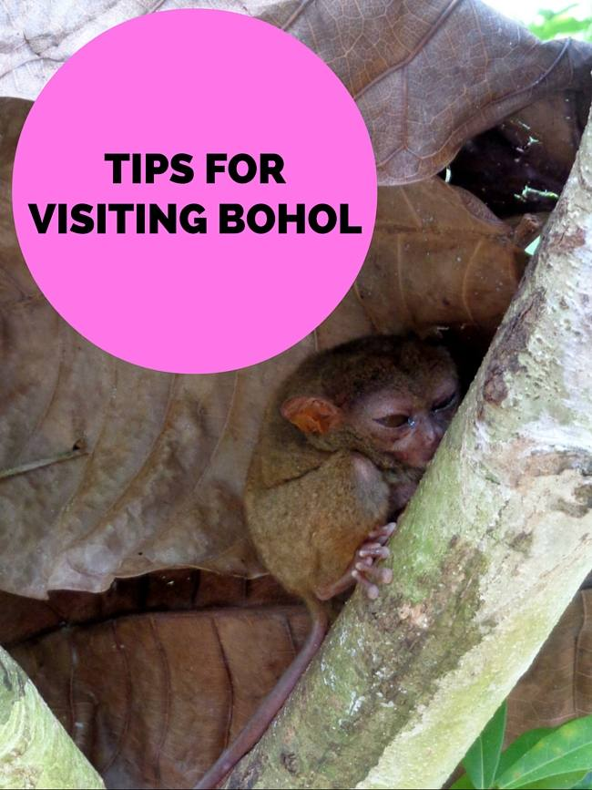 Tips for Visiting Bohol Philippines