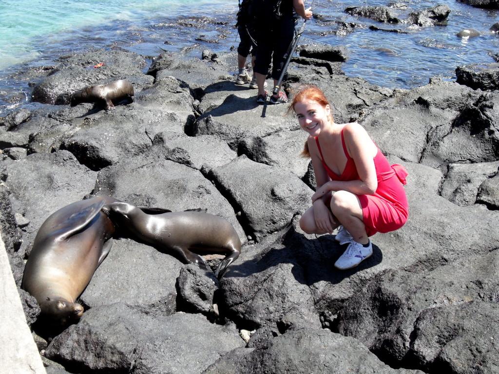 seals Galapagos