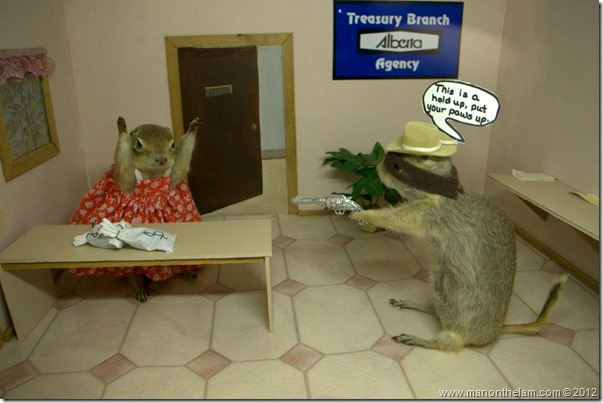 Bank-robbery-stuffed-gophers-at-Gopher-Hole-Museum-Torrington-Alberta_thumb