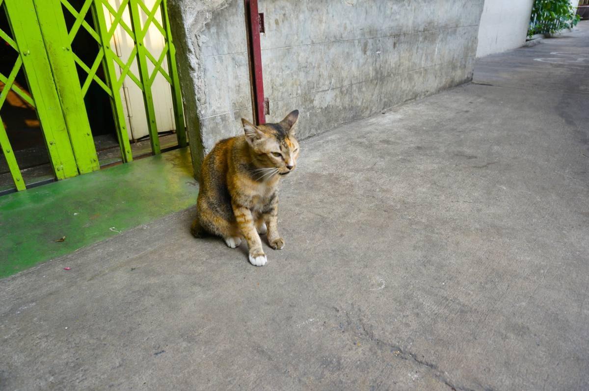 BangkokThailandCat