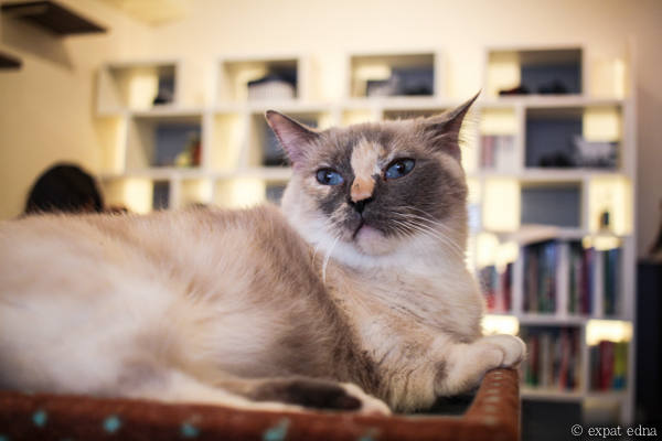 Cat Cafe Tokyo by Expat Edna