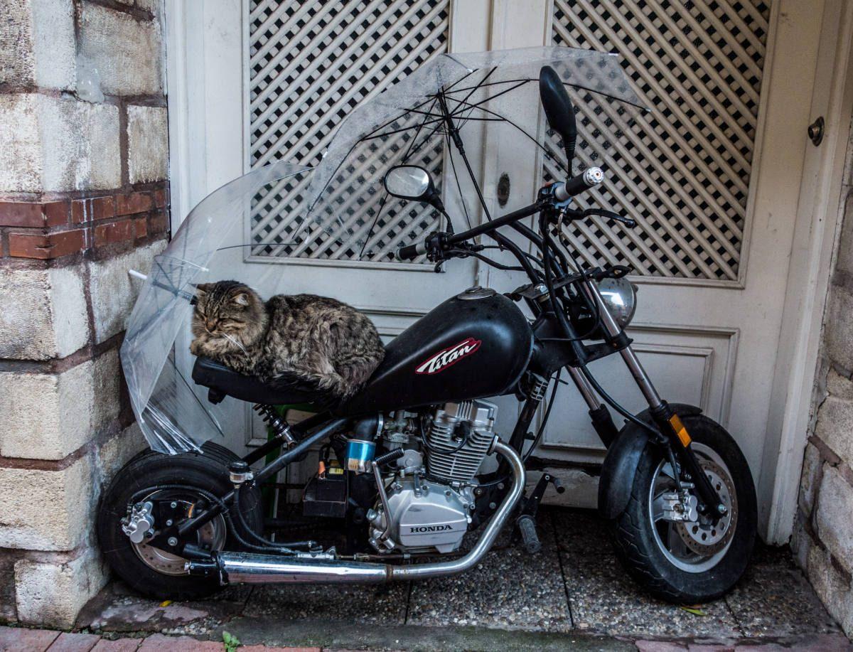 Cats can be badasses! Photocredit: Alesha & Jarryd - Nomadasaurus