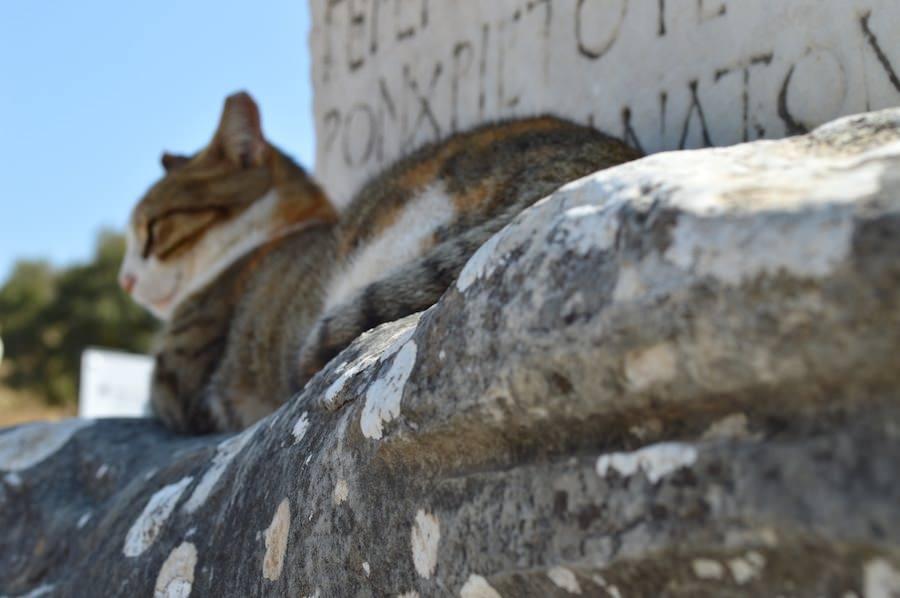 Cats-at-Ephesus