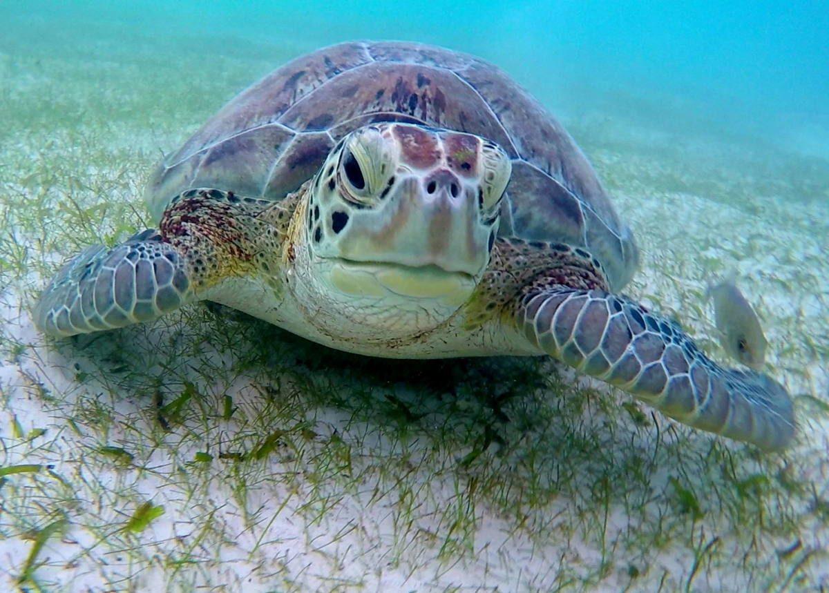 turtles Mexico