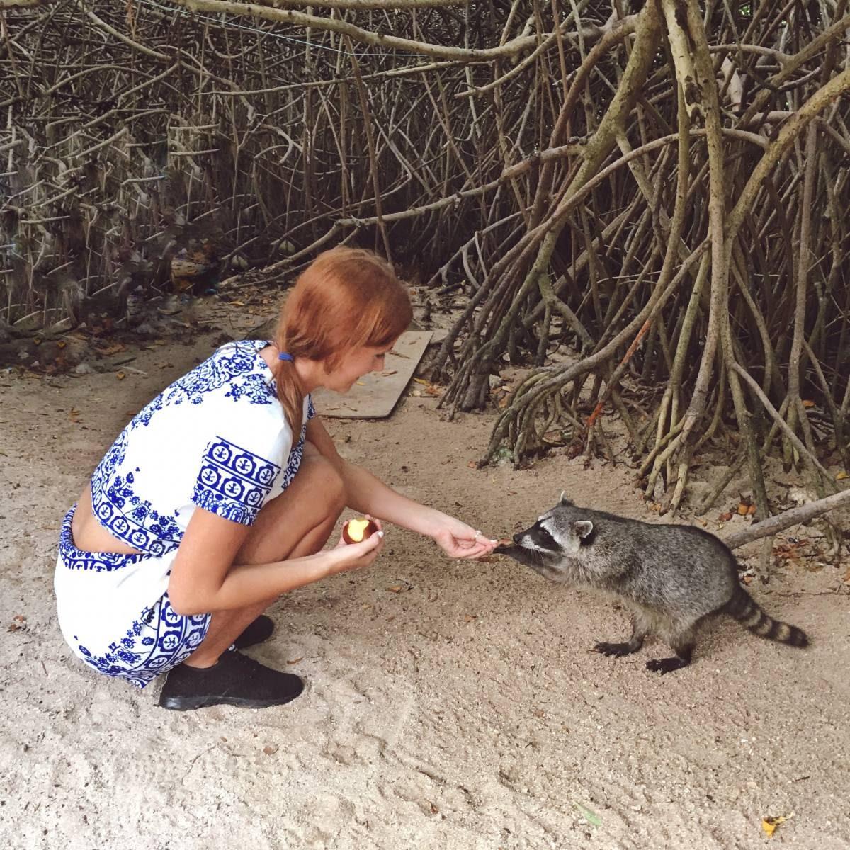 Instagram raccoon