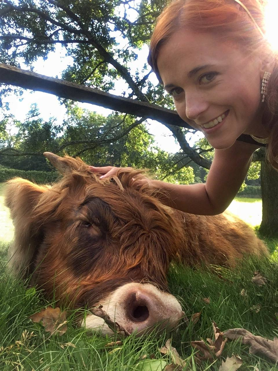 Making friends with a highland coo!