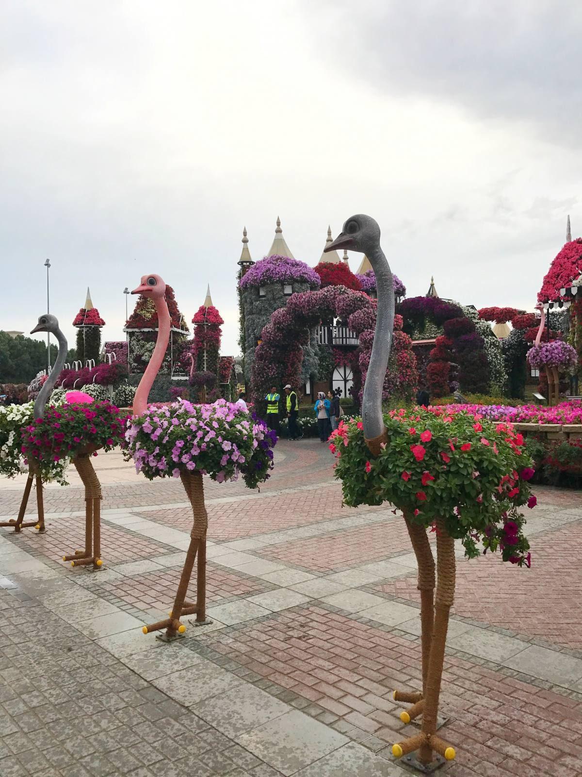 ostriches miracle garden