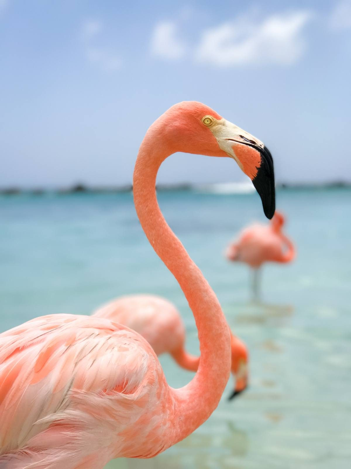 How to Visit Flamingos in Aruba: Renaissance Private Island