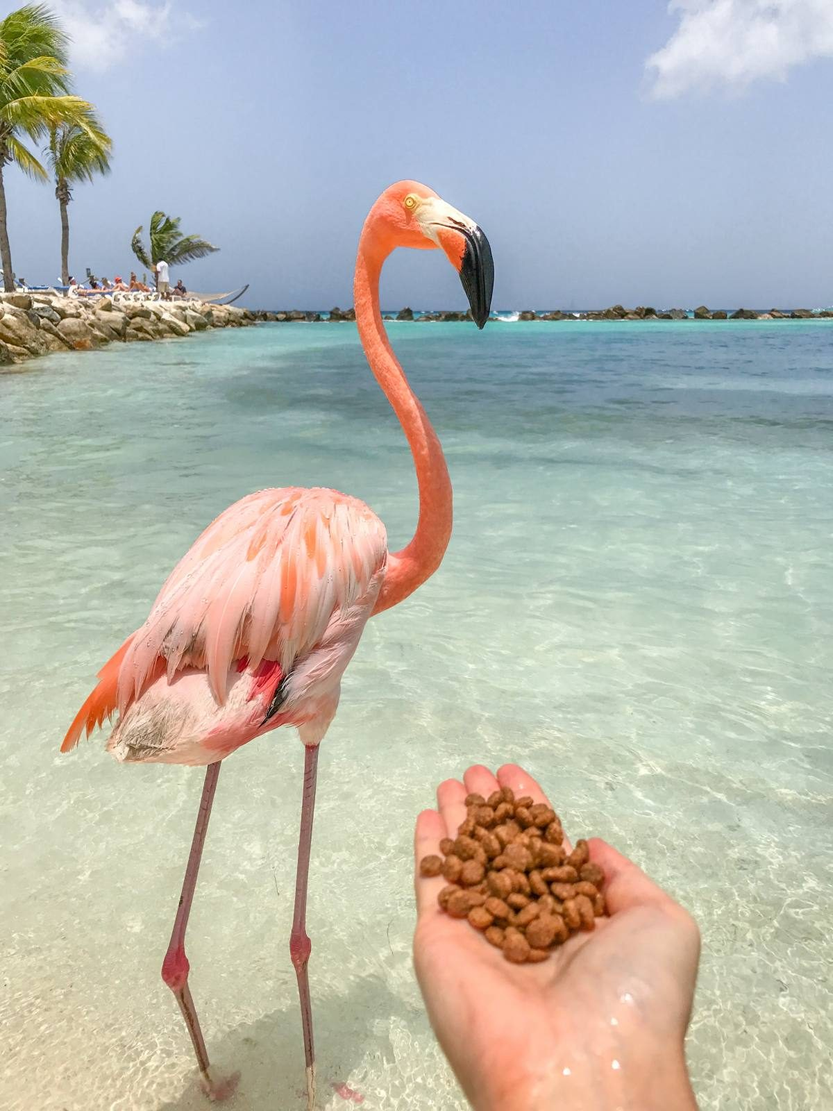 show me pictures of flamingos