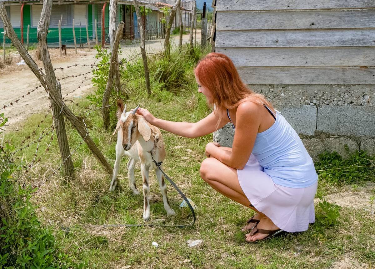 goats Cuba