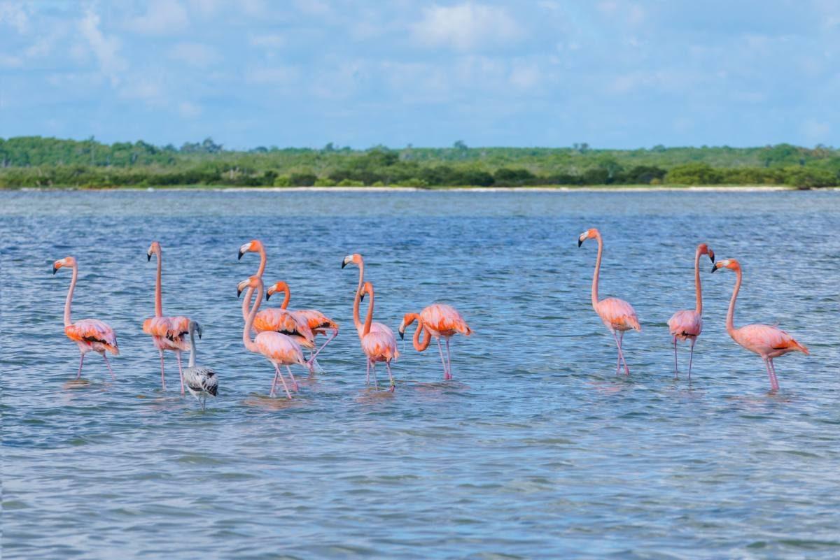 Las Coloradas Mexico Map.How To Arrange A Trip To Las Coloradas Pink Lakes Mexico Anna
