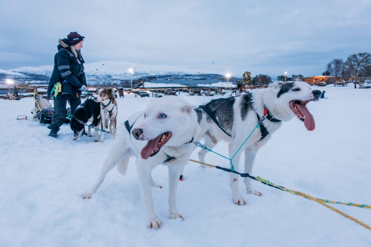 dog sledding tromso