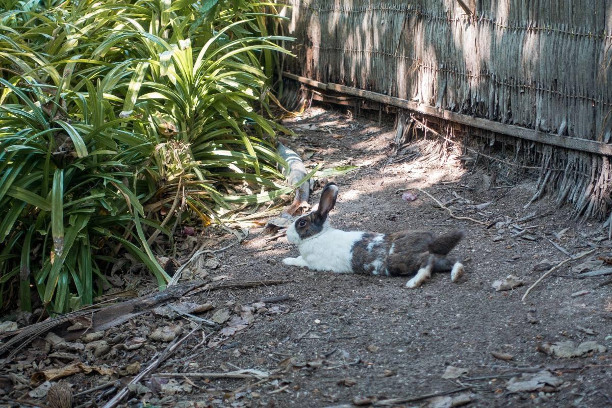 bunnies soneva fushi