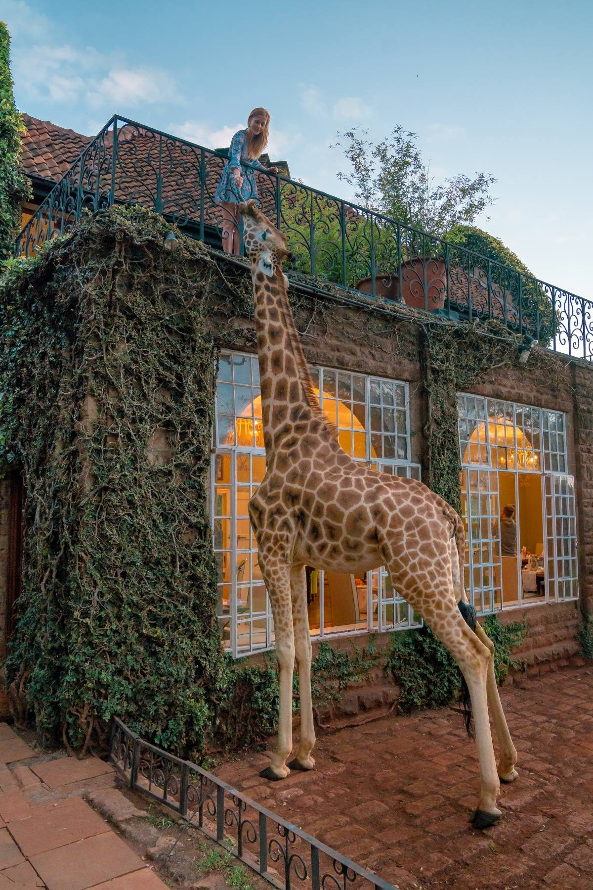 morning at giraffe manor