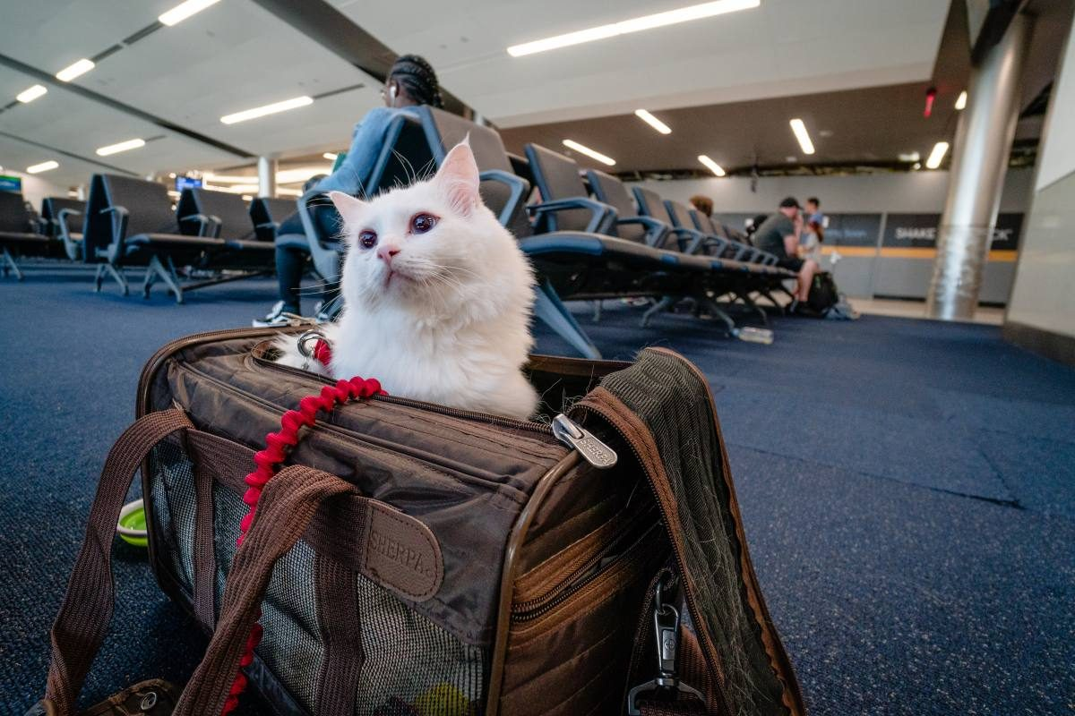 25372321a996 How to Travel with a Cat