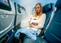 How to Travel with a Cat (incl. Flying with a Cat)