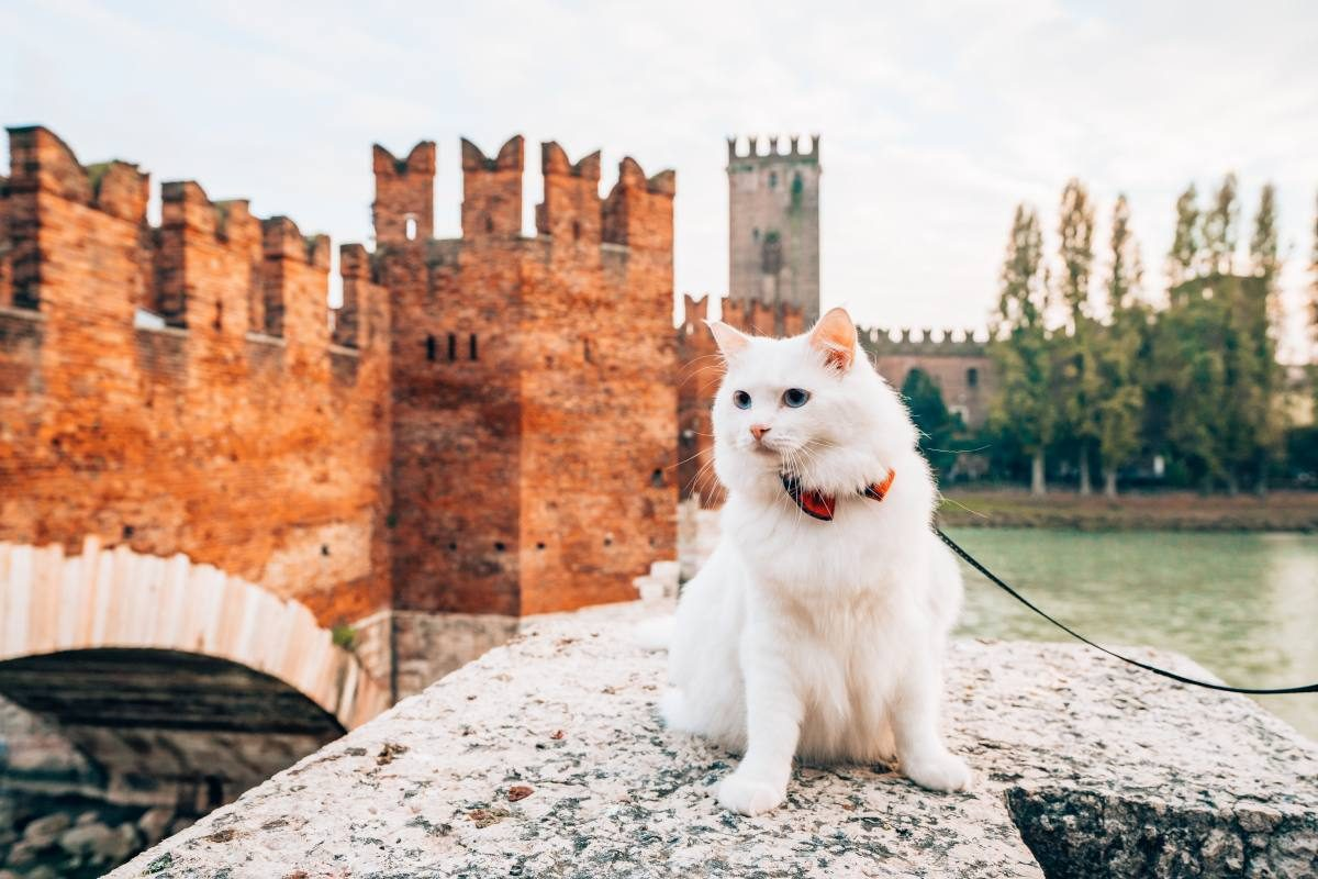 bringing a cat to Italy from US