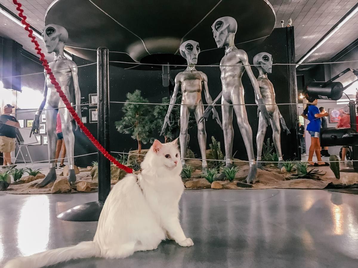 cat at UFO museum