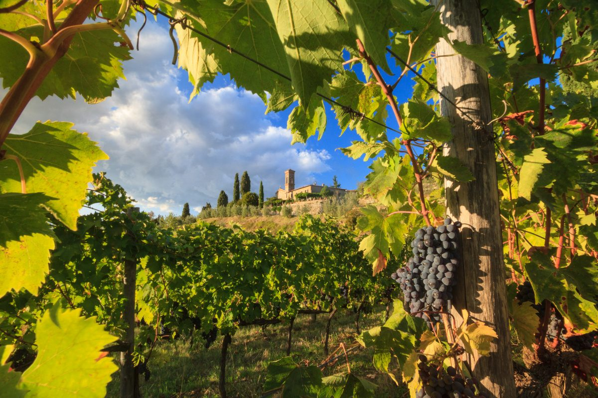 Chianti Day Trip from Florence