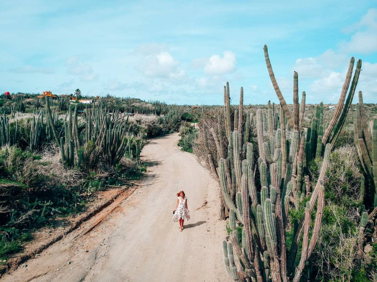 what to do in aruba arikok