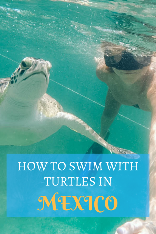 How to Swim with Turtles in Mexico