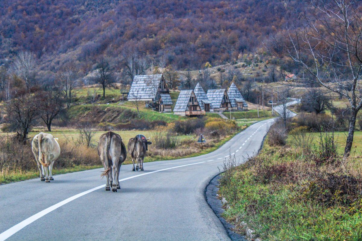 traveling to Montenegro