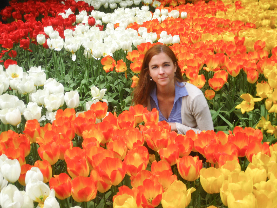 How to see Tulips
