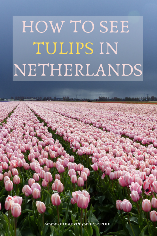 How to See Tulips in the Netherlands