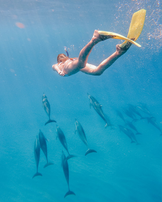 swimming with dolphins Mauritius
