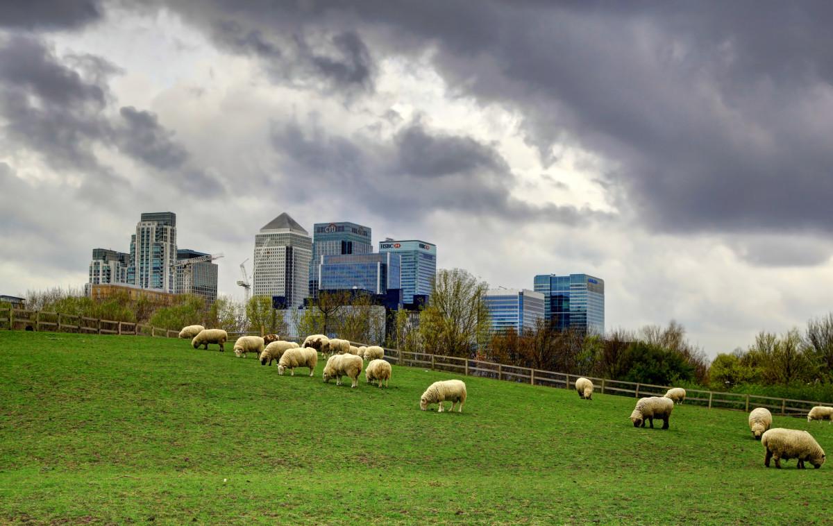 London farm