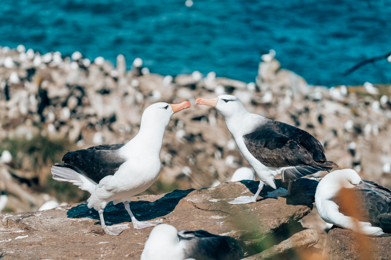 West Point Island birds