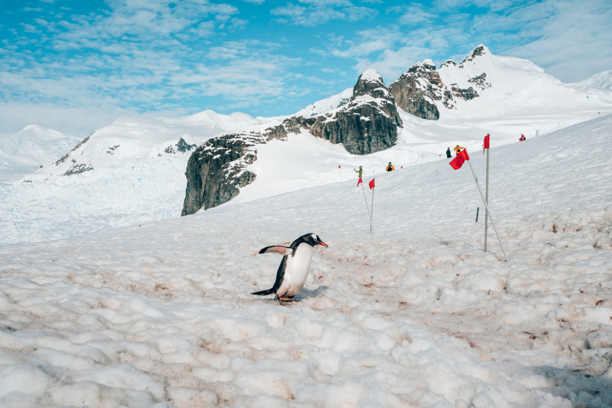 How to Book a Cheap Trip to Antarctica