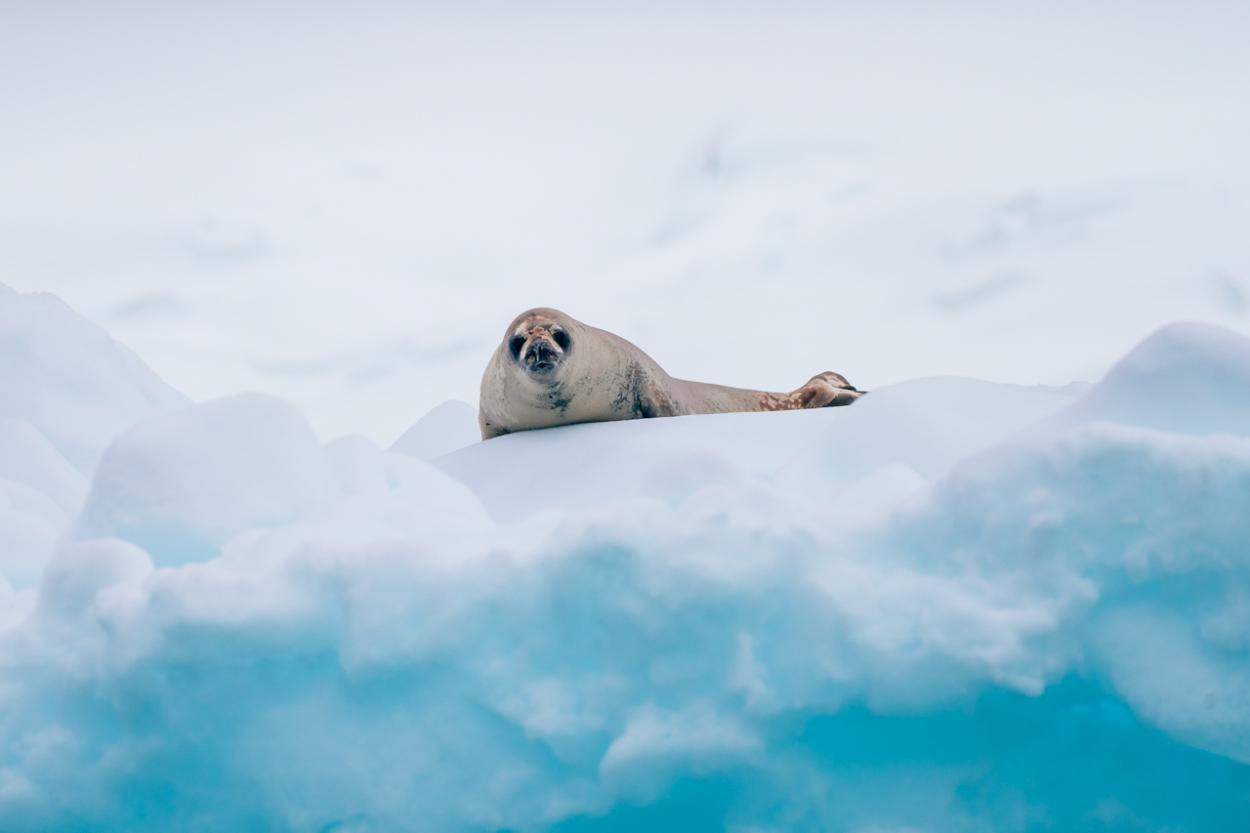 last minute Antarctica