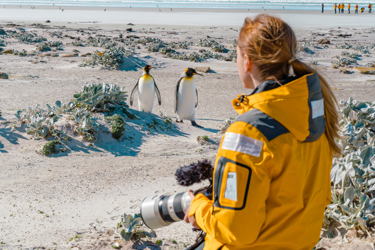 penguins falklands