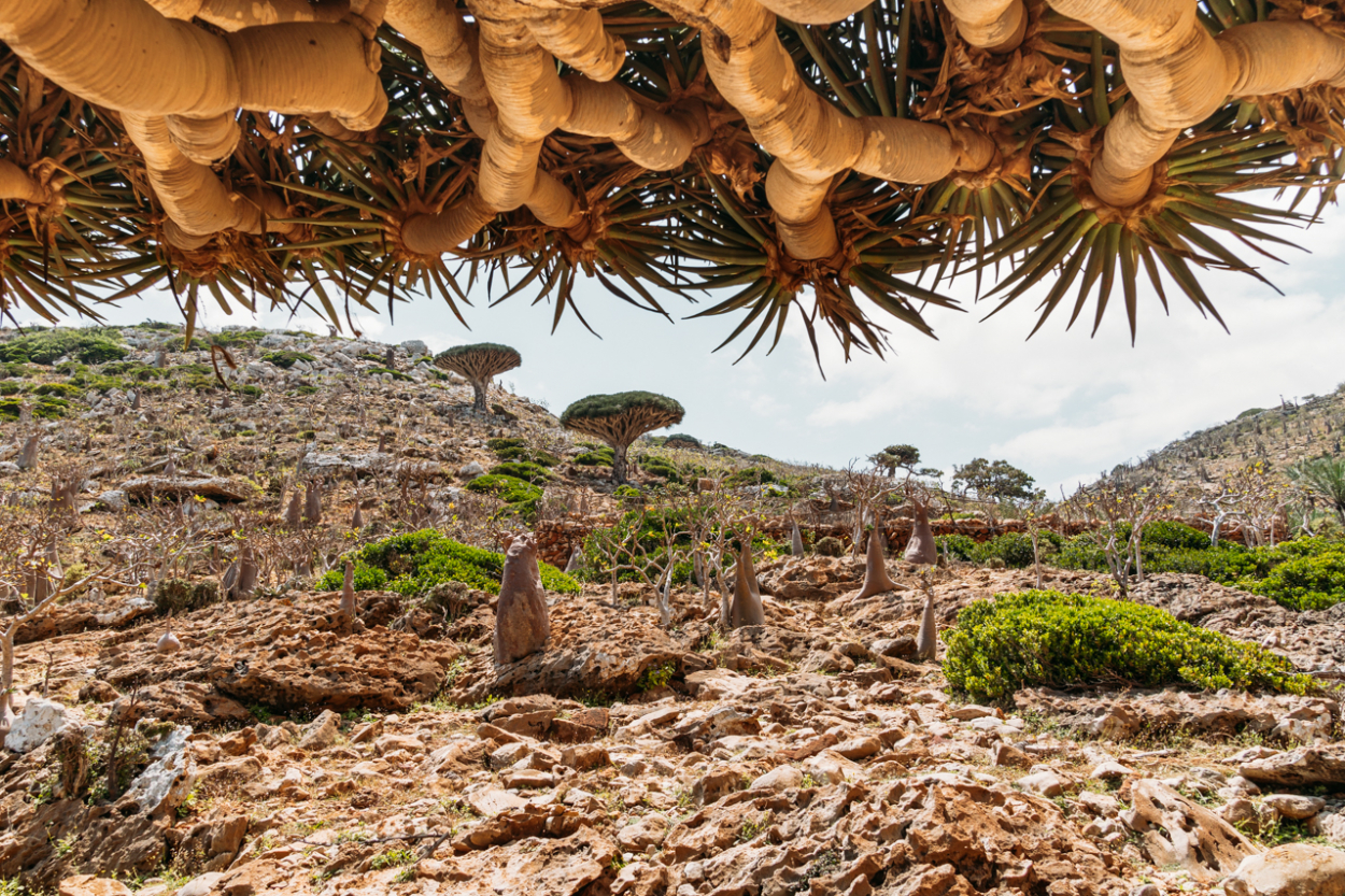 How To Book a Yemenia Flight from Cairo to Socotra