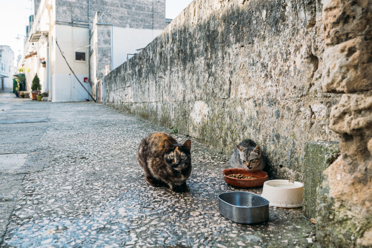 cats in Matera